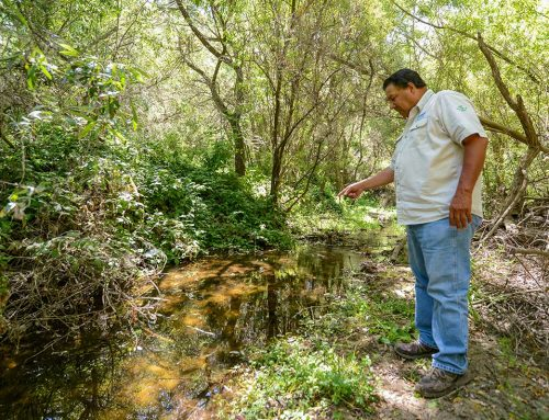 Threatened trout return to San Benito River